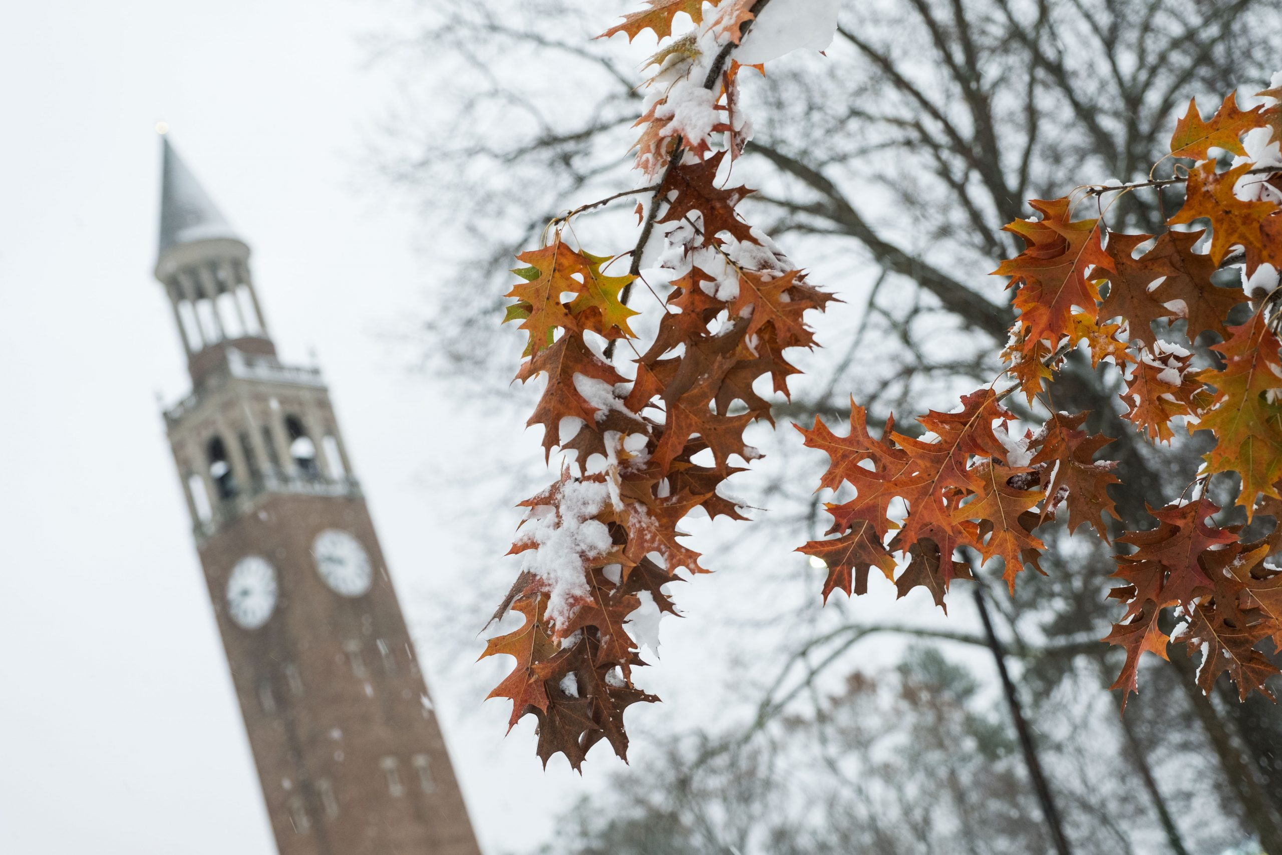 Orange Fall leaves with a little bit of snow on them. The Bell Tower is in the background.